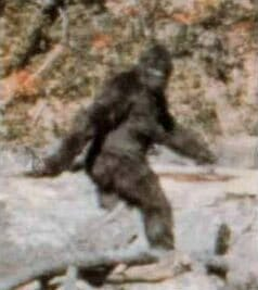 sasquatch bigfoot sounds