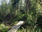 Alpine Hiking Boot
