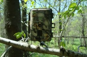 Best_tips_of_using_a_trail_camera_effectively