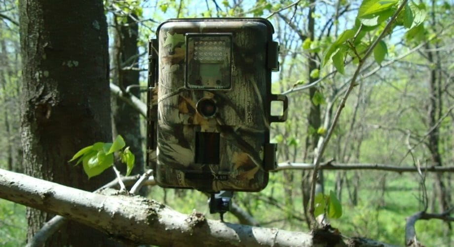 Best tips of using a trail camera effectively