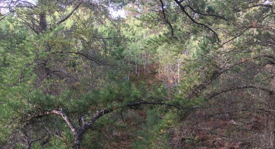 TREE-STAND SET-UP FOR BOWHUNTING