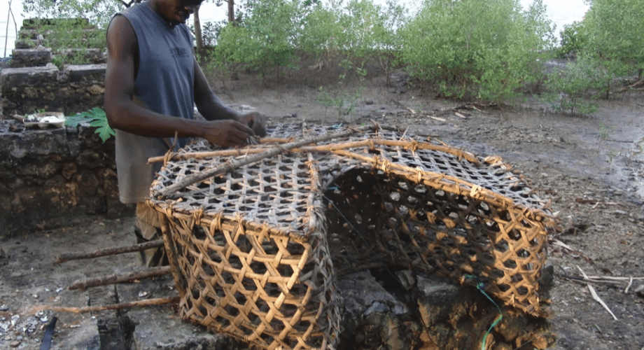Survival Skill: How To Build A Cage Fish Trap