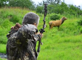 hunt deer