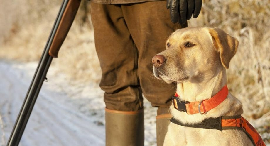 How to Prepare Your Dog For Hunting Season