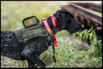 SafeShoot releases technology to prevent hunting tragedies.