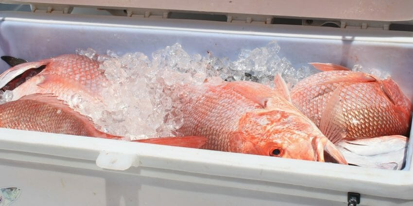 3 Excellent Tips on Choosing the Right Cooler top coolers Outdoors