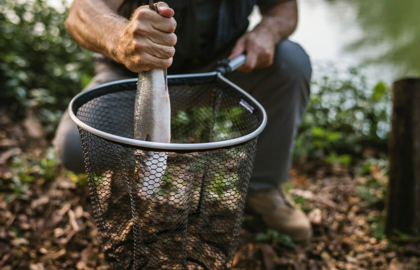 how to catch a fish fast