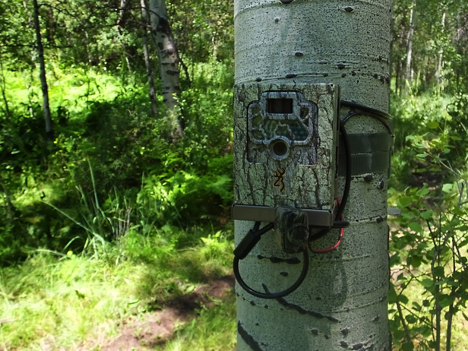 Tips and Tricks When Using Trail Cameras trailcamera tips Hunting