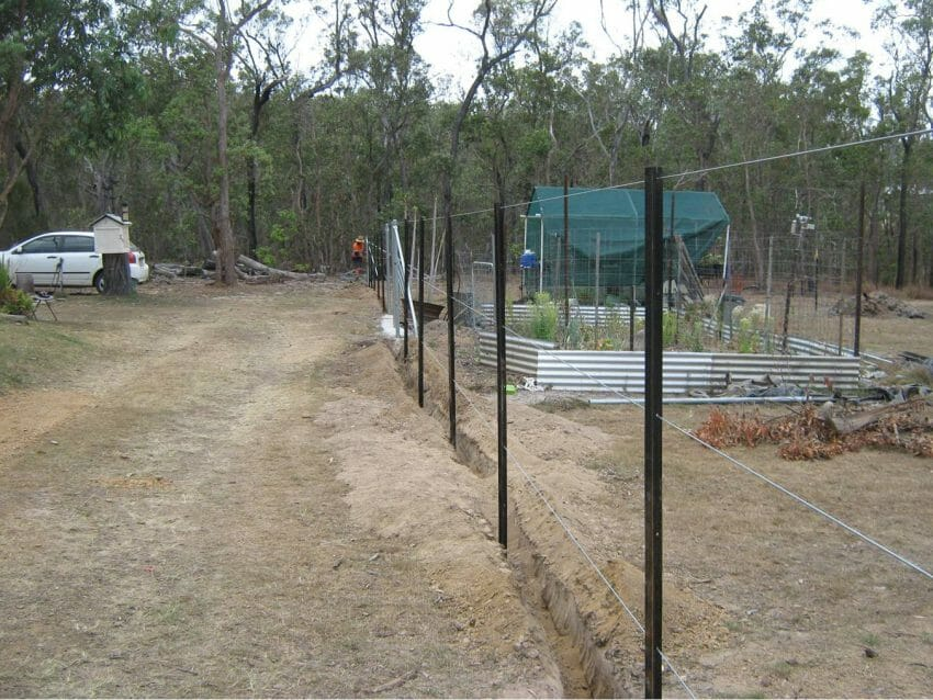 Both Sides of Fencing animals Outdoors