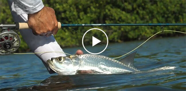 St. Croix's New Imperial® Salt Fly Rods fishing, fishing rods Fishing & Boating News
