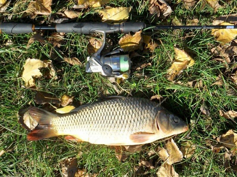 How to Prepare for Carp Fishing carp fishing Fishing