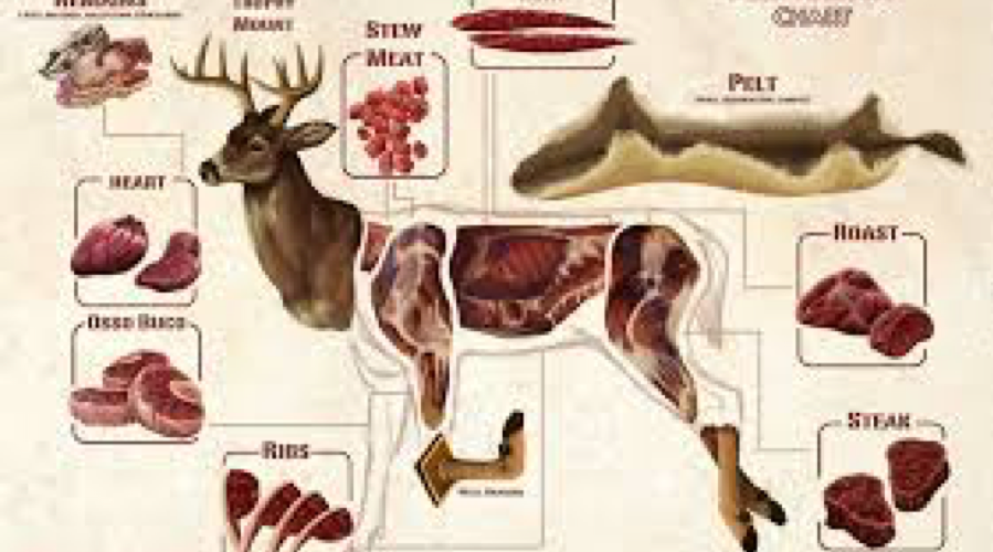 Want to Get in the Venison Meat Processing and Distribution Business? Here's What You Need to Know