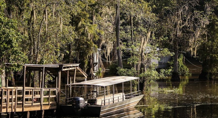 Why New Orleans Swamp Tours Are Hidden Gems of NOLA Fun