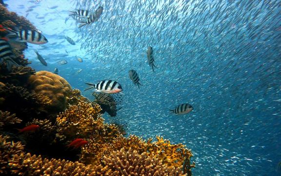 Top 4 Tips for Deep Sea Fishing fishing Fishing