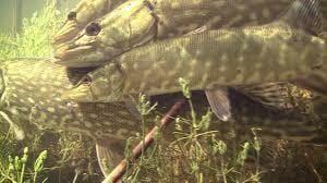 Fishing Tips for Beginners fishing tips Fishing