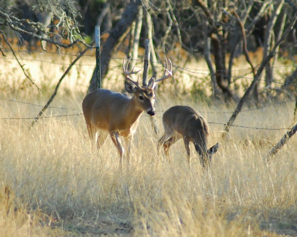 deer hunting | M&R Glasgow | Flickr