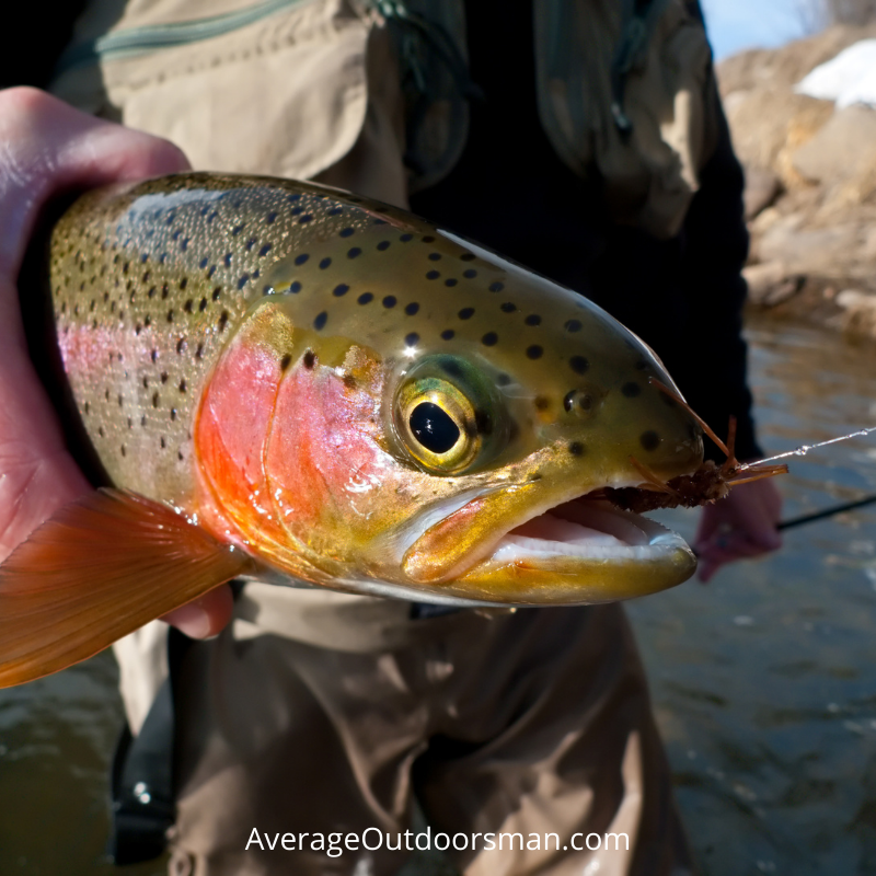 Beginner Trout Tips trout lures