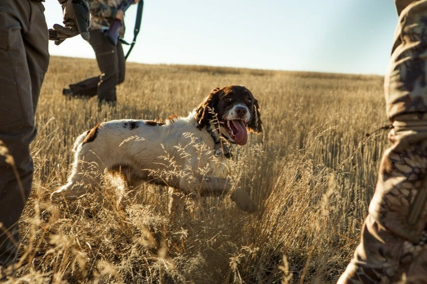 Best Hunting-Related Websites Worth Your Attention Best Hunting-Related Websites Hunting