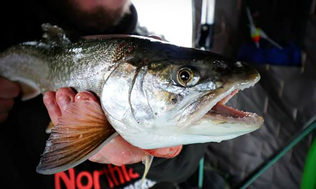 Major Midwinter Opportunity fishing lures, ice fishing Fishing & Boating News