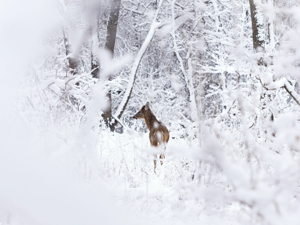 Tips for Hunting White Tailed Deer in the Rain or Snow Hunting White Tailed Deer in the Rain Hunting