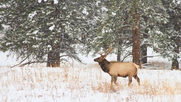 What Things Can Make Hunting Easier? bowhunting, broadheads, elk Hunting