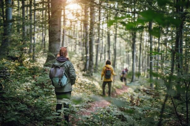Young couple on hiking in the forest Group of young friends hikers with backpacks in the forest, walking in nature hiking stock pictures, royalty-free photos & images