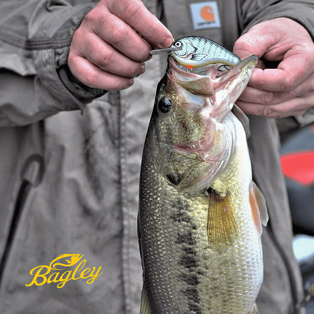 Bagley Baits and Classic Bass Champions Tour Join Forces fishing, fishing lures Fishing & Boating News