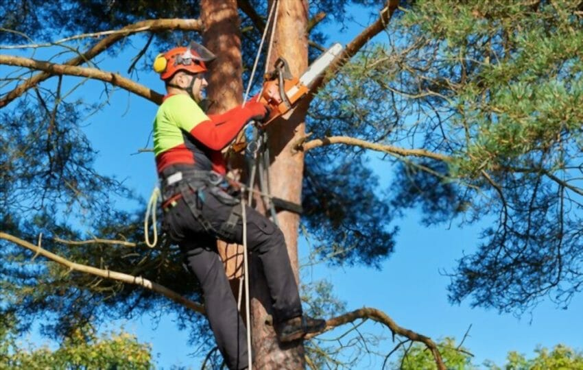 What is a Safety Harness? outdoor safety, tree climbing Active Outdoors