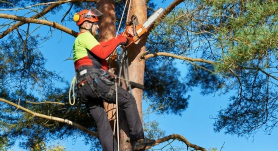 What is a Safety Harness?