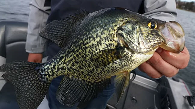 Float Fishing for Spring Crappies crappie fishing, fishing, float fishing Fishing & Boating News